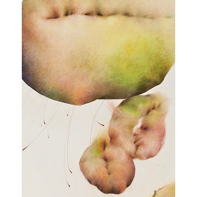 "Chayote, Cycles II (detail), 48"" x 42"", mixed media on sanded paper, 2009"