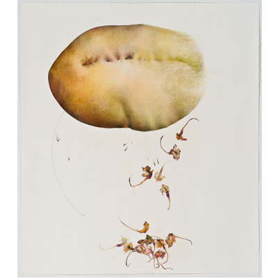 "Chayote & Seedlings, Cycles I, 48"" x 42"", mixed media on sanded paper, 2009"